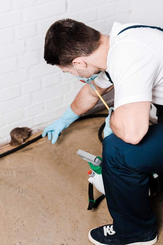 pest control and inspection services brisbane