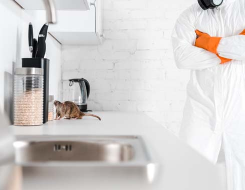 pest control professional looking at rodent